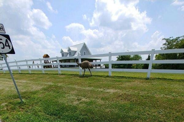 Emu on the loose in Ohio county